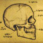 Portfolio laurent gosselin : skull